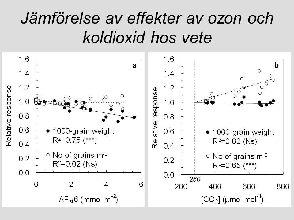 Jämförelse av effekter av ozon och koldioxid hos vete