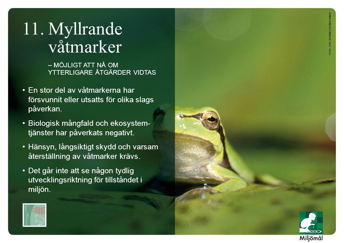 •En stor del av våtmarkerna har försvunnit eller utsatts för olika slags påverkan.