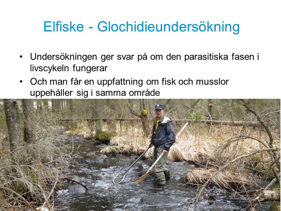 Sportfiskarna är intresseorganisationen för alla sportfiskare.