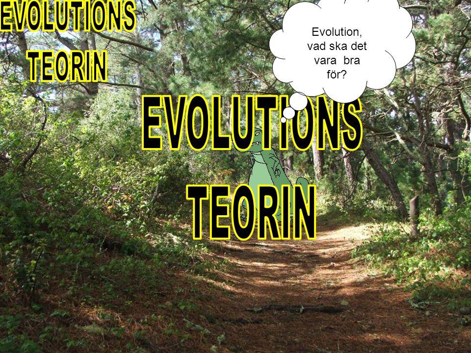 Darwin Beagle Reste Kom på
