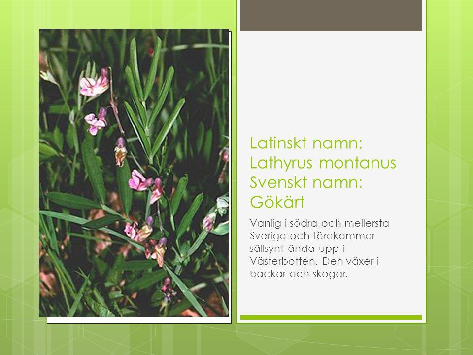 Latinskt namn: Lathyrus montanus Svenskt namn: Gökärt Vanlig i södra och mellersta Sverige och förekommer sällsynt ända upp i Västerbotten. Den växer