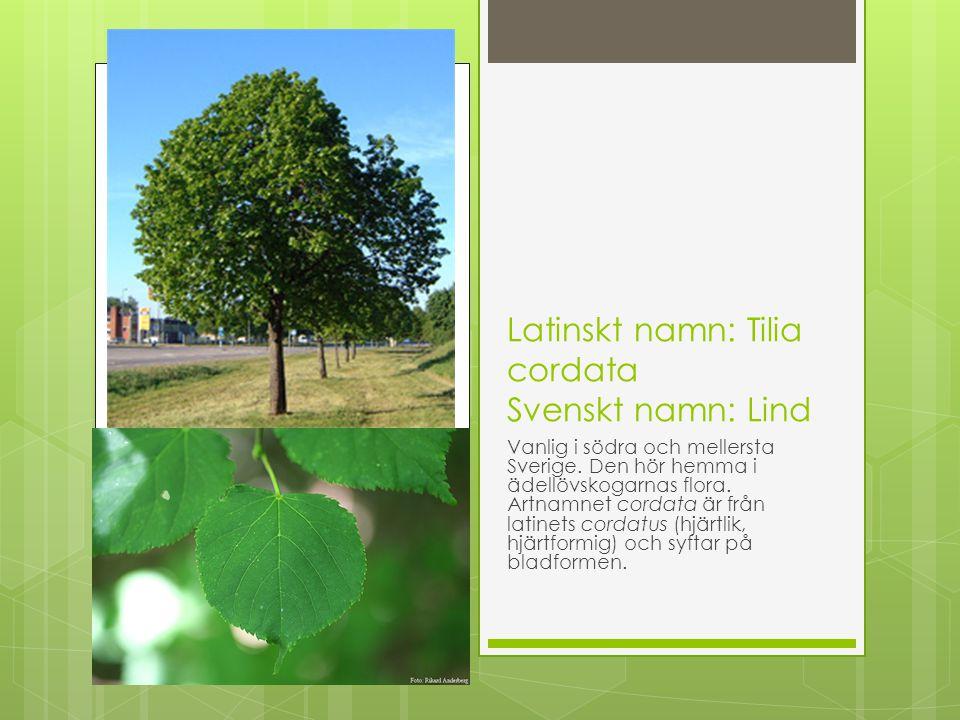 Latinskt namn: Tilia cordata Svenskt namn: Lind Vanlig i södra och mellersta Sverige. Den hör hemma i ädellövskogarnas flora. Artnamnet cordata är frå