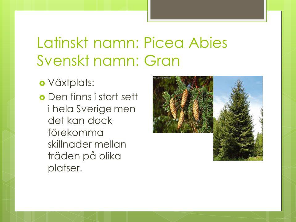 Latinskt namn: Picea Abies Svenskt namn: Gran  Växtplats:  Den finns i stort sett i hela Sverige men det kan dock förekomma skillnader mellan träden