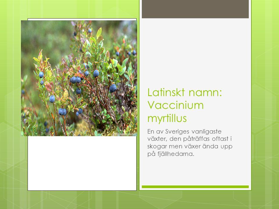 Latinskt namn: Anemone nemorosa Svenskt namn: Vitsippa Finns i nästan hela landet, den är ovanlig i fjälltrakterna och saknas helt allra längst i norr.