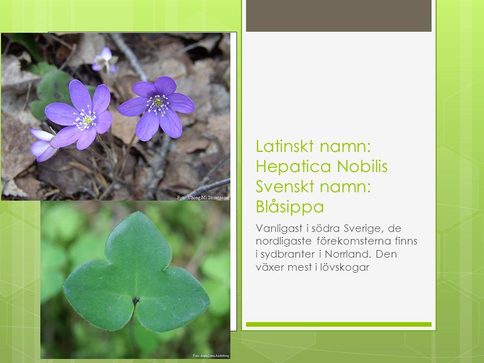 Latinskt namn: Juniperus communis Svenskt namn: En Vanlig i hela landet, den växer i skogar, backar, betesmarker och hedar.