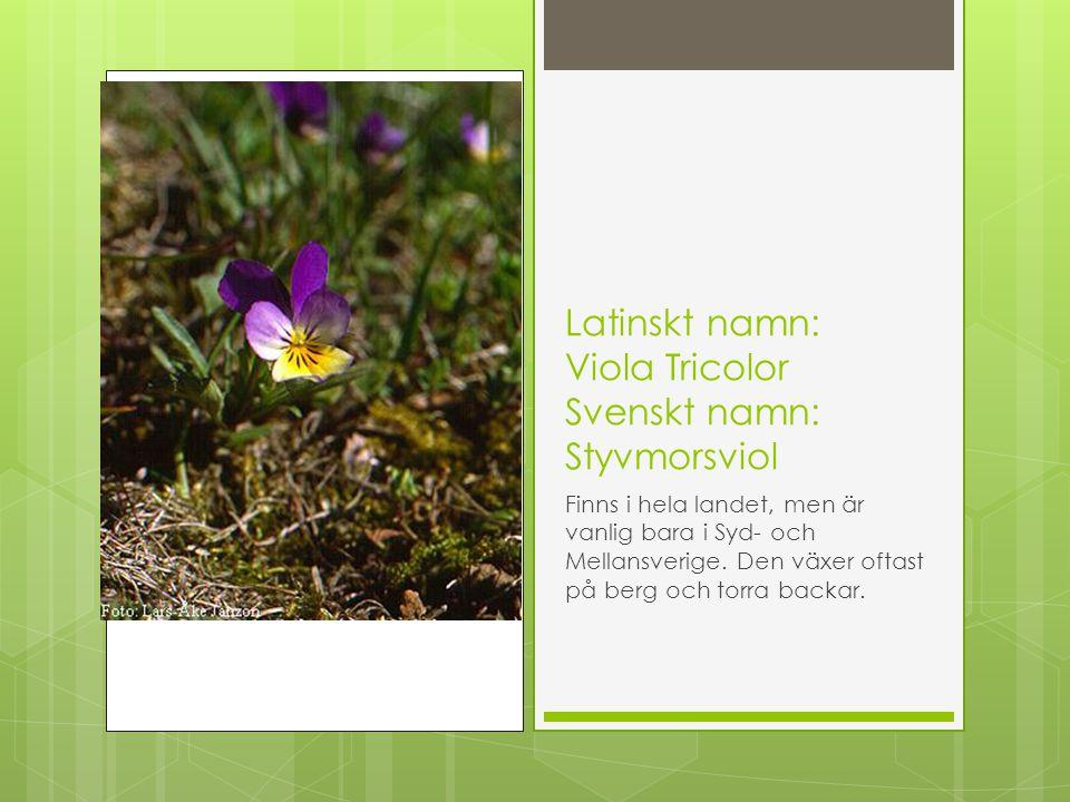 Latinskt namn: Viola Tricolor Svenskt namn: Styvmorsviol Finns i hela landet, men är vanlig bara i Syd- och Mellansverige. Den växer oftast på berg oc