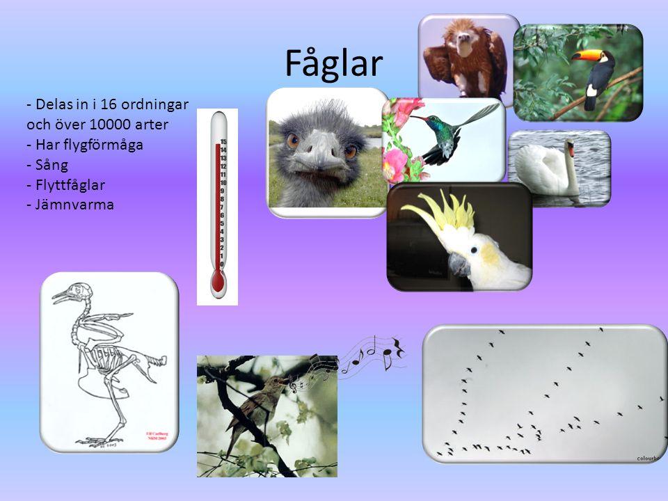 Fåglar - Delas in i 16 ordningar och över 10000 arter - Har flygförmåga - Sång - Flyttfåglar - Jämnvarma