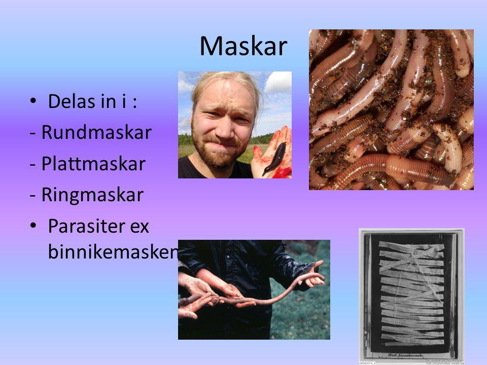 Blötdjur • Delas in i tre klasser: - Sniglar (0 skal) Snäckor (1 skal) - Musslor (2 skal) - Bläckfiskar • Djur med mjuk kropp.