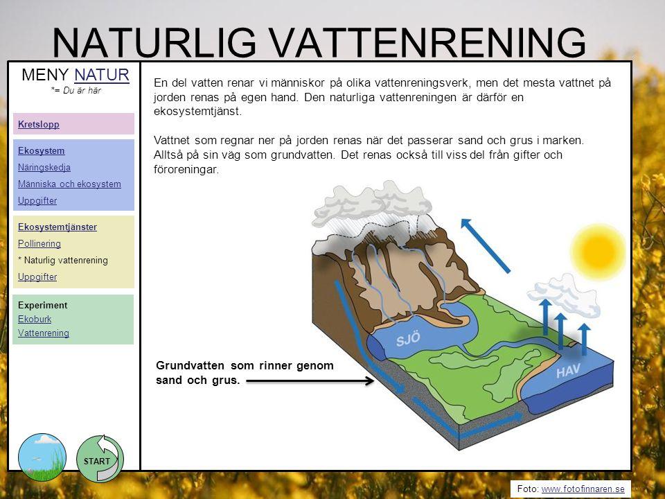 START Foto: www.fotofinnaren.sewww.fotofinnaren.se NATURLIG VATTENRENING En del vatten renar vi människor på olika vattenreningsverk, men det mesta va