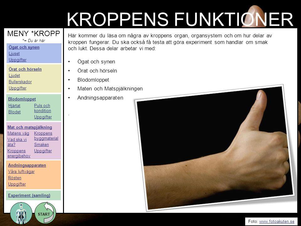 START Foto: www.fotoakuten.sewww.fotoakuten.se START Här kommer du läsa om några av kroppens organ, organsystem och om hur delar av kroppen fungerar.