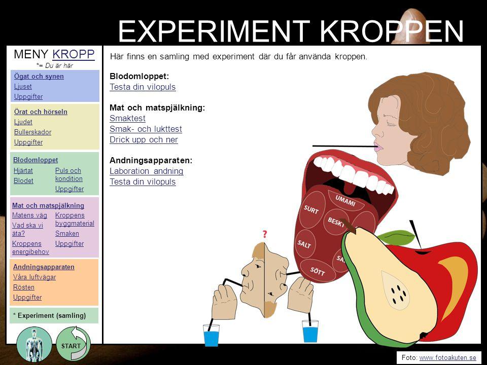 START Foto: www.fotoakuten.sewww.fotoakuten.se START EXPERIMENT KROPPEN Blodomloppet: Testa din vilopuls Mat och matspjälkning: Smaktest Smak- och luk