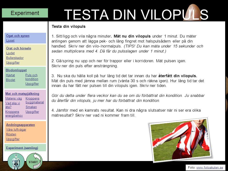 START Foto: www.fotoakuten.sewww.fotoakuten.se START TESTA DIN VILOPULS Experiment Testa din vilopuls 1. Sitt/ligg och vila några minuter. Mät nu din