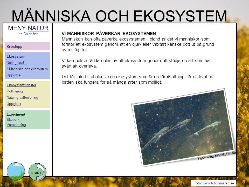START Foto: www.fotofinnaren.sewww.fotofinnaren.se MÄNNISKA OCH EKOSYSTEM MENY NATURNATUR *= Du är här VI MÄNNISKOR PÅVERKAR EKOSYSTEMEN Människan kan