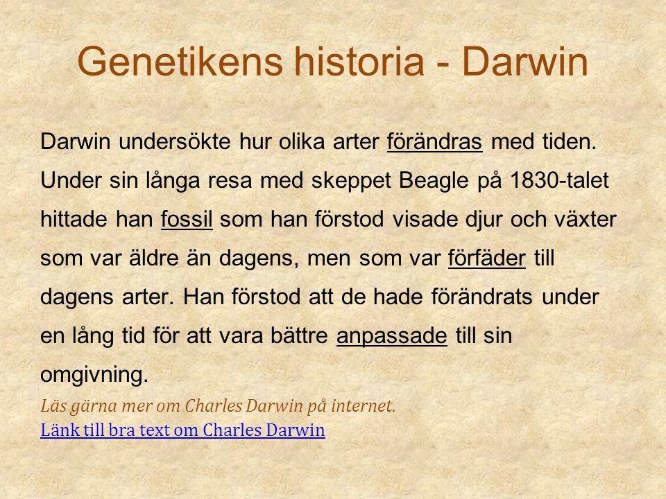Genetikens historia - Darwin Darwin undersökte hur olika arter förändras med tiden. Under sin långa resa med skeppet Beagle på 1830-talet hittade han