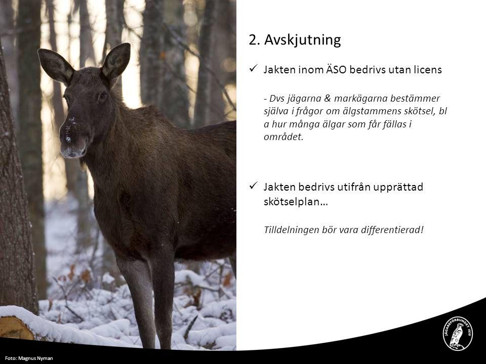 2. Avskjutning  Jakten inom ÄSO bedrivs utan licens - Dvs jägarna & markägarna bestämmer själva i frågor om älgstammens skötsel, bl a hur många älgar