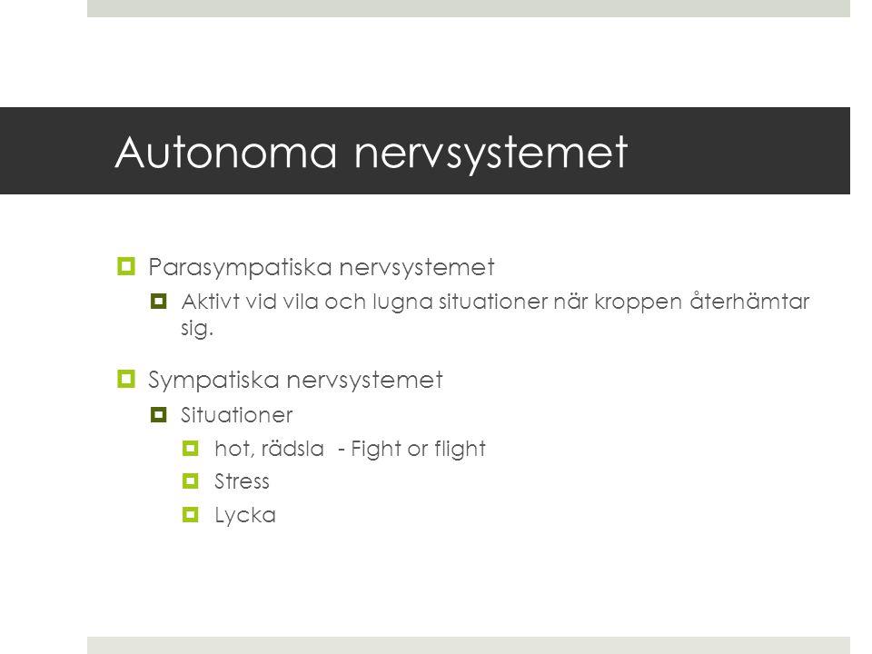 Autonoma nervsystemet  Parasympatiska nervsystemet  Aktivt vid vila och lugna situationer när kroppen återhämtar sig.  Sympatiska nervsystemet  Si