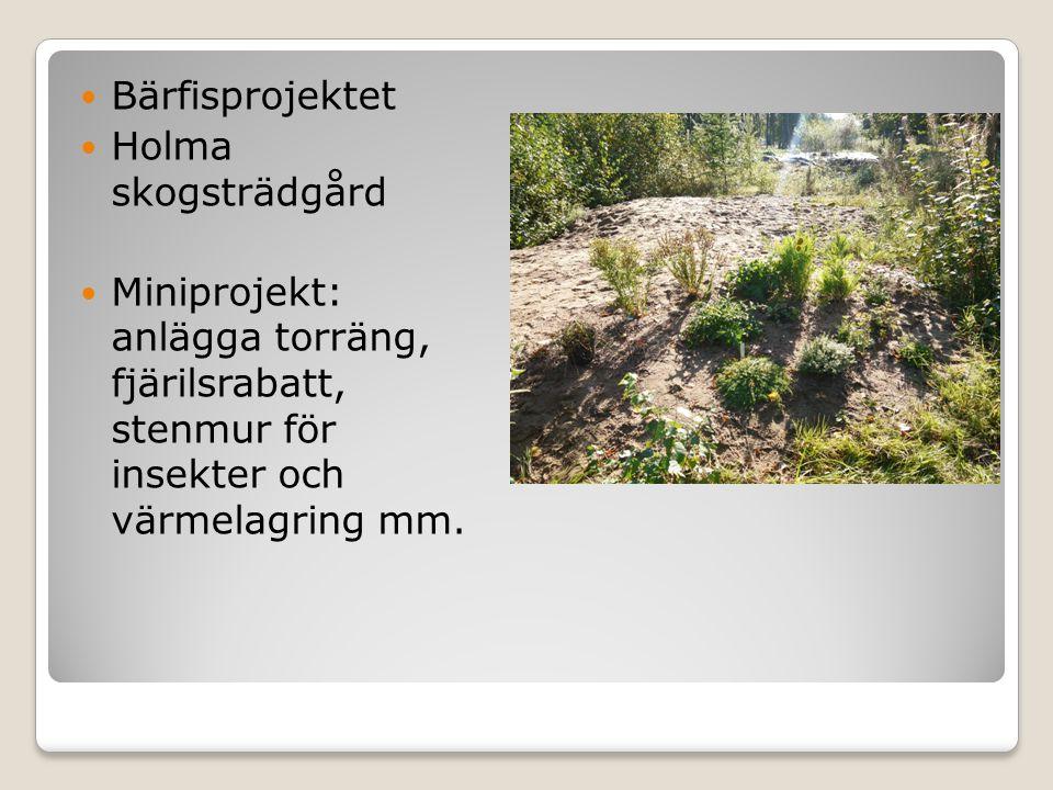  Bärfisprojektet  Holma skogsträdgård  Miniprojekt: anlägga torräng, fjärilsrabatt, stenmur för insekter och värmelagring mm.