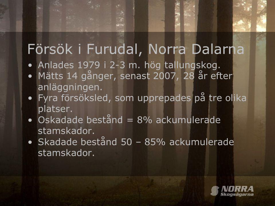 Försök i Furudal, Norra Dalarna •Anlades 1979 i 2-3 m. hög tallungskog. •Mätts 14 gånger, senast 2007, 28 år efter anläggningen. •Fyra försöksled, som