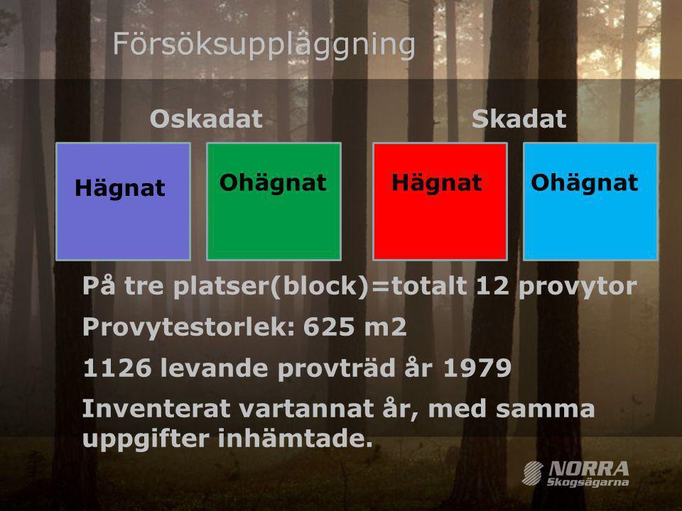 Ohägnat Försöksuppläggning På tre platser(block)=totalt 12 provytor Provytestorlek: 625 m2 1126 levande provträd år 1979 Inventerat vartannat år, med