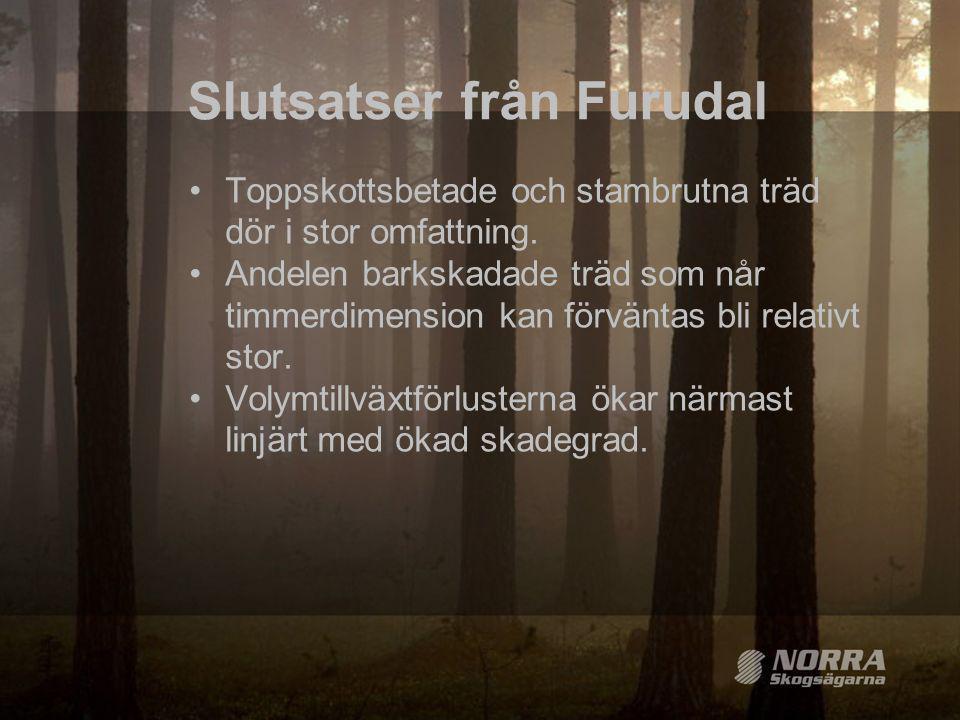 Slutsatser från Furudal •Toppskottsbetade och stambrutna träd dör i stor omfattning. •Andelen barkskadade träd som når timmerdimension kan förväntas b