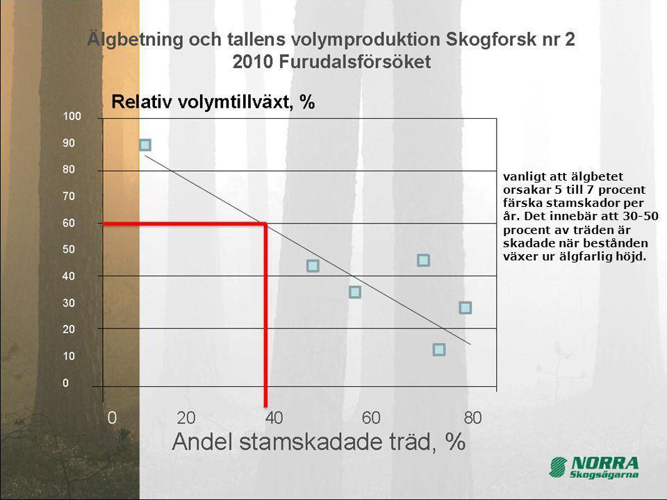 9 vanligt att älgbetet orsakar 5 till 7 procent färska stamskador per år. Det innebär att 30-50 procent av träden är skadade när bestånden växer ur äl