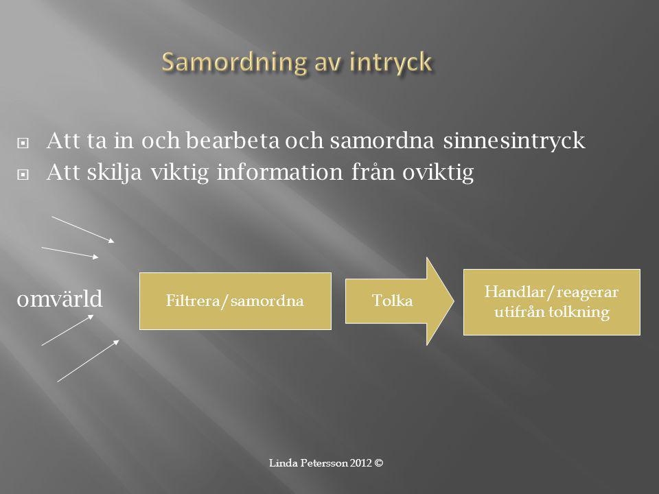  Att ta in och bearbeta och samordna sinnesintryck  Att skilja viktig information från oviktig omvärld Filtrera/samordna Tolka Handlar/reagerar utif