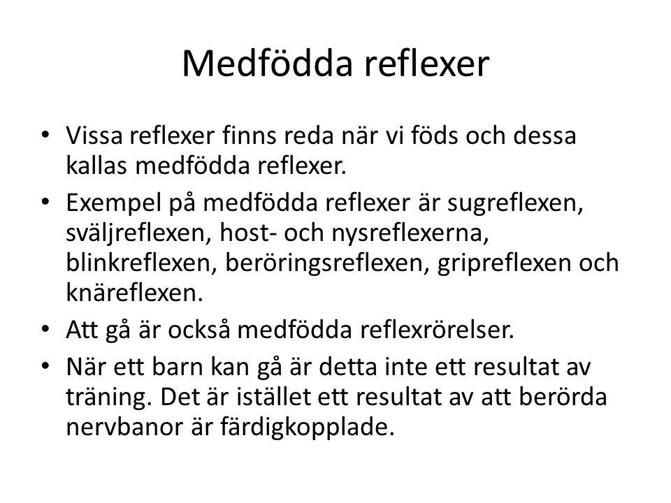 Medfödda reflexer • Vissa reflexer finns reda när vi föds och dessa kallas medfödda reflexer. • Exempel på medfödda reflexer är sugreflexen, sväljrefl