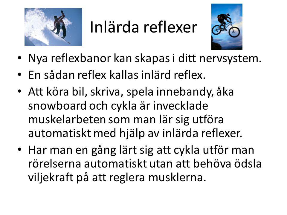 Inlärda reflexer • Nya reflexbanor kan skapas i ditt nervsystem. • En sådan reflex kallas inlärd reflex. • Att köra bil, skriva, spela innebandy, åka