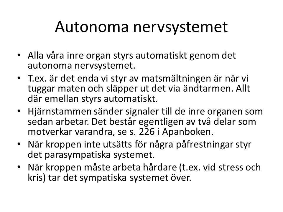 Autonoma nervsystemet • Alla våra inre organ styrs automatiskt genom det autonoma nervsystemet. • T.ex. är det enda vi styr av matsmältningen är när v
