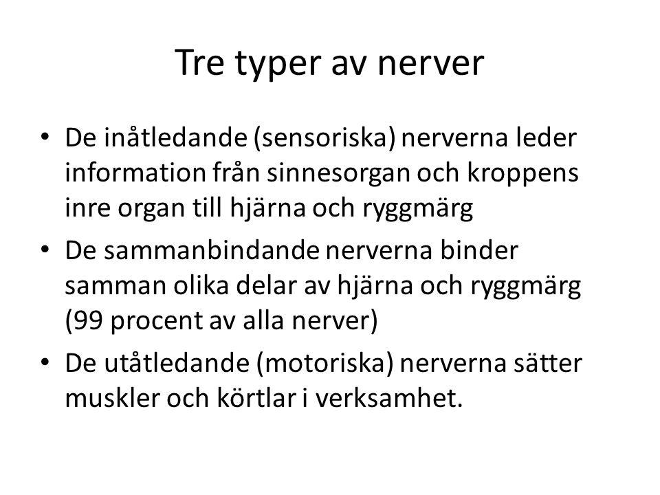 Tre typer av nerver • De inåtledande (sensoriska) nerverna leder information från sinnesorgan och kroppens inre organ till hjärna och ryggmärg • De sa