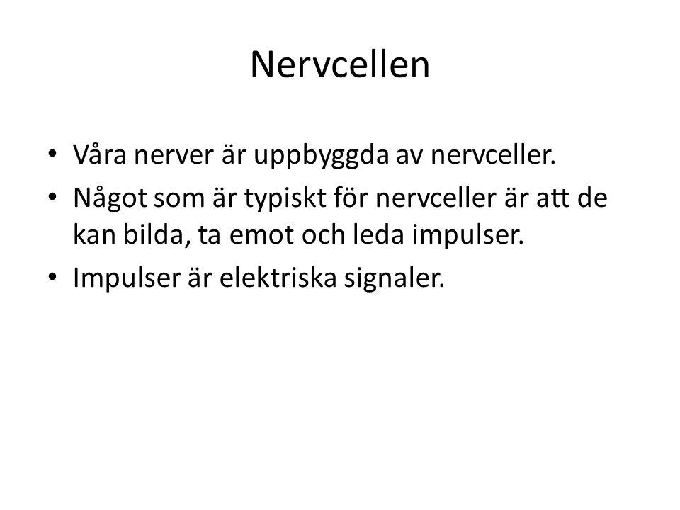 Nervcellen • Våra nerver är uppbyggda av nervceller. • Något som är typiskt för nervceller är att de kan bilda, ta emot och leda impulser. • Impulser