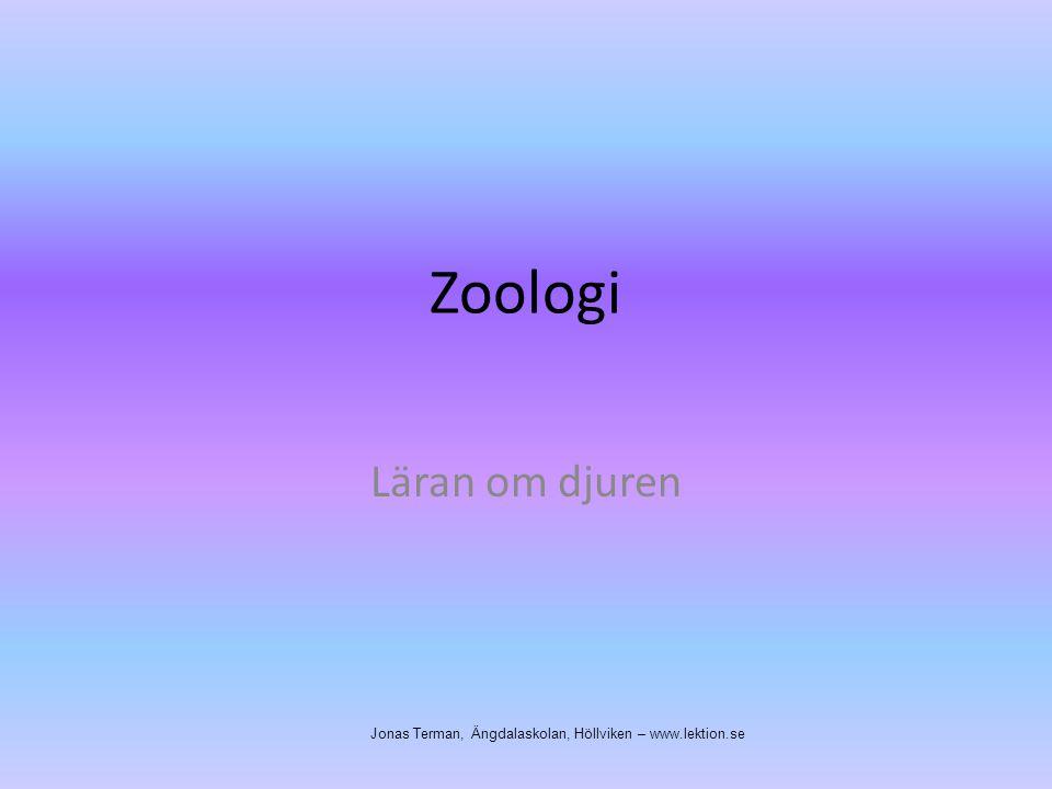 Zoologi Läran om djuren Jonas Terman, Ängdalaskolan, Höllviken – www.lektion.se