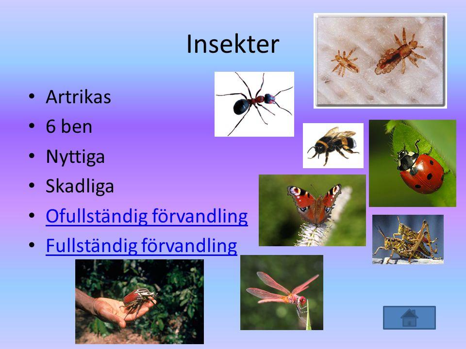 Insekter • Artrikas • 6 ben • Nyttiga • Skadliga • Ofullständig förvandling Ofullständig förvandling • Fullständig förvandling Fullständig förvandling
