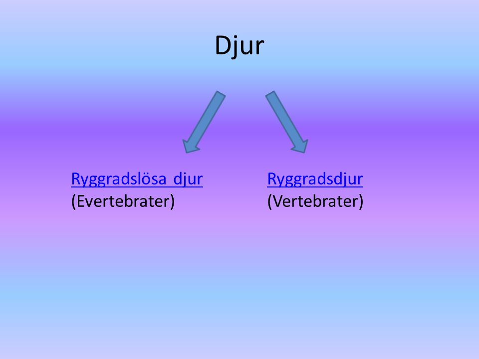 Djur Ryggradslösa djur (Evertebrater) Ryggradsdjur (Vertebrater)