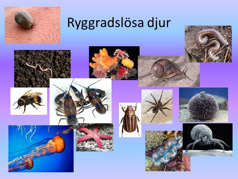 Urdjur • Encelliga • Plankton • Mikroskop
