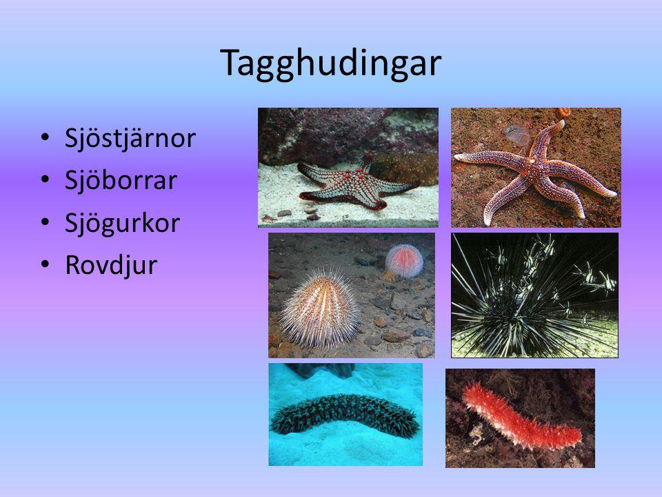 Blötdjur • Sniglar (0 skal) • Snäckor (1 skal) • Musslor (2 skal) • Bläckfiskar