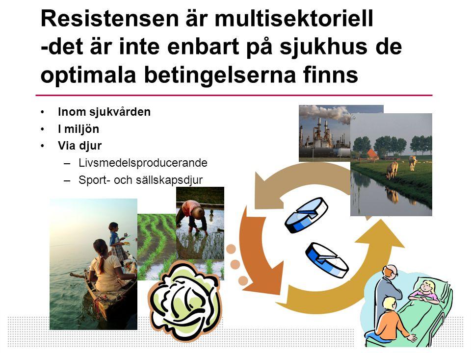 Resistensen är multisektoriell -det är inte enbart på sjukhus de optimala betingelserna finns •Inom sjukvården •I miljön •Via djur –Livsmedelsproducerande –Sport- och sällskapsdjur