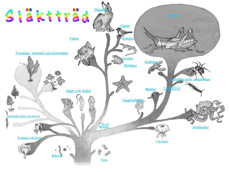 1.De flesta sjöstjärnor har fem armar. 2.Sjöborrar äter alger, smådjur och musslor.