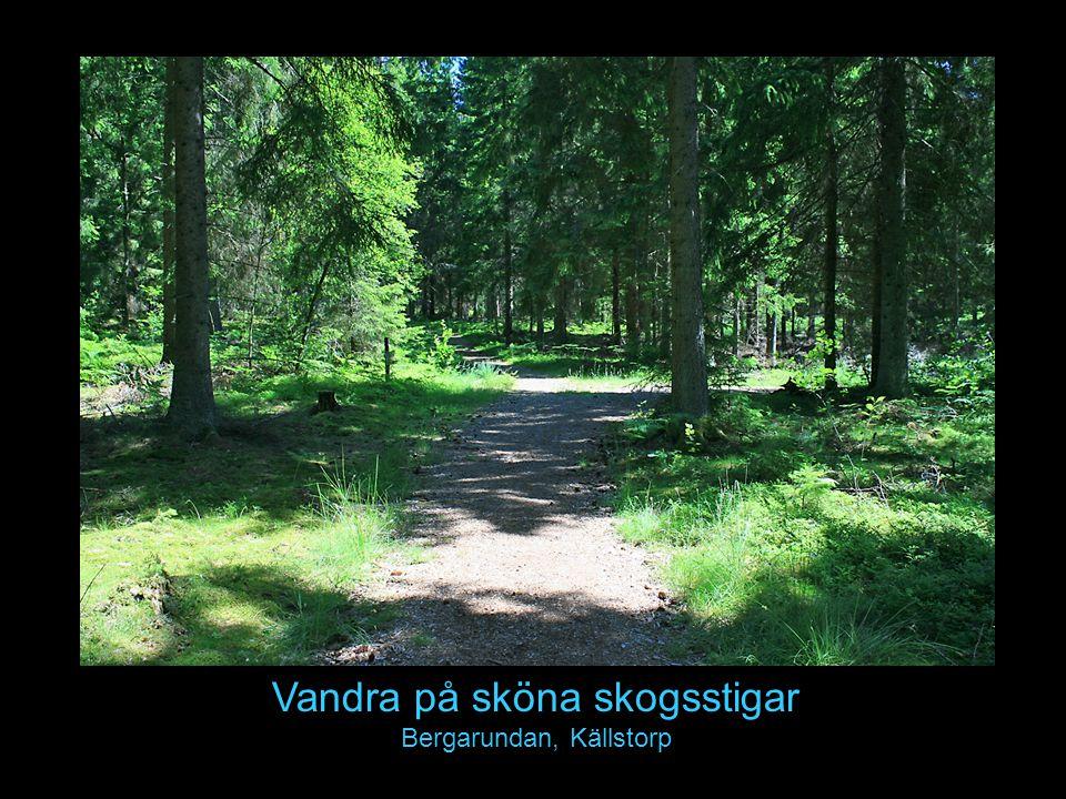 Vandra på sköna skogsstigar Bergarundan, Källstorp