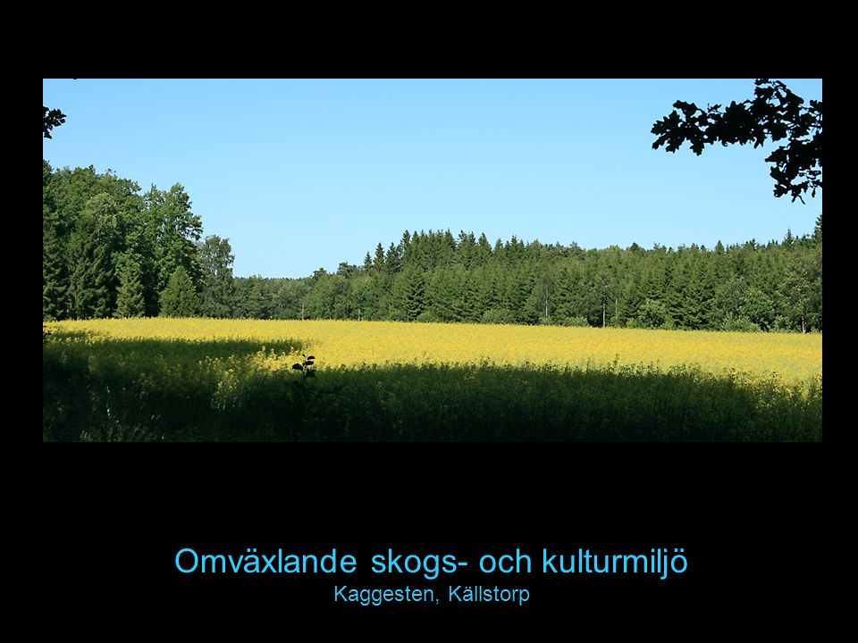 Omväxlande skogs- och kulturmiljö Kaggesten, Källstorp
