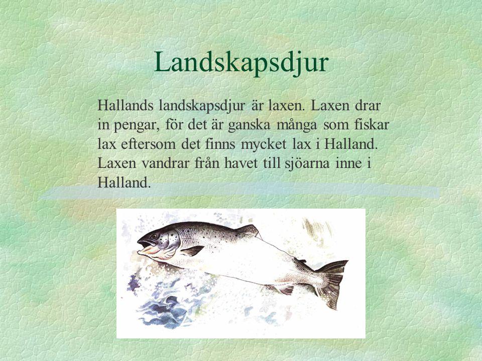 Landskapsdjur Hallands landskapsdjur är laxen. Laxen drar in pengar, för det är ganska många som fiskar lax eftersom det finns mycket lax i Halland. L