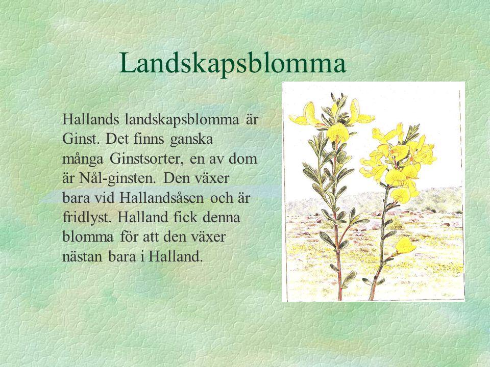 Landskapsblomma Hallands landskapsblomma är Ginst. Det finns ganska många Ginstsorter, en av dom är Nål-ginsten. Den växer bara vid Hallandsåsen och ä