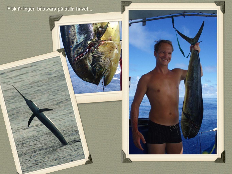 Fisk är ingen bristvara på stilla havet...