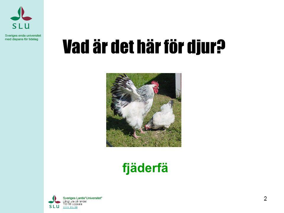 2 Vad är det här för djur? fjäderfä Långt ute på landet 700 99 Uppsala www.slu.se
