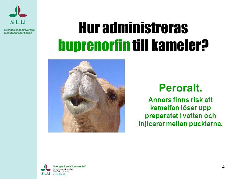4 Hur administreras buprenorfin till kameler.Peroralt.