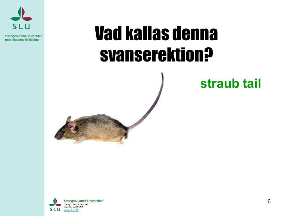 6 Vad kallas denna svanserektion? straub tail Långt ute på landet 700 99 Uppsala www.slu.se