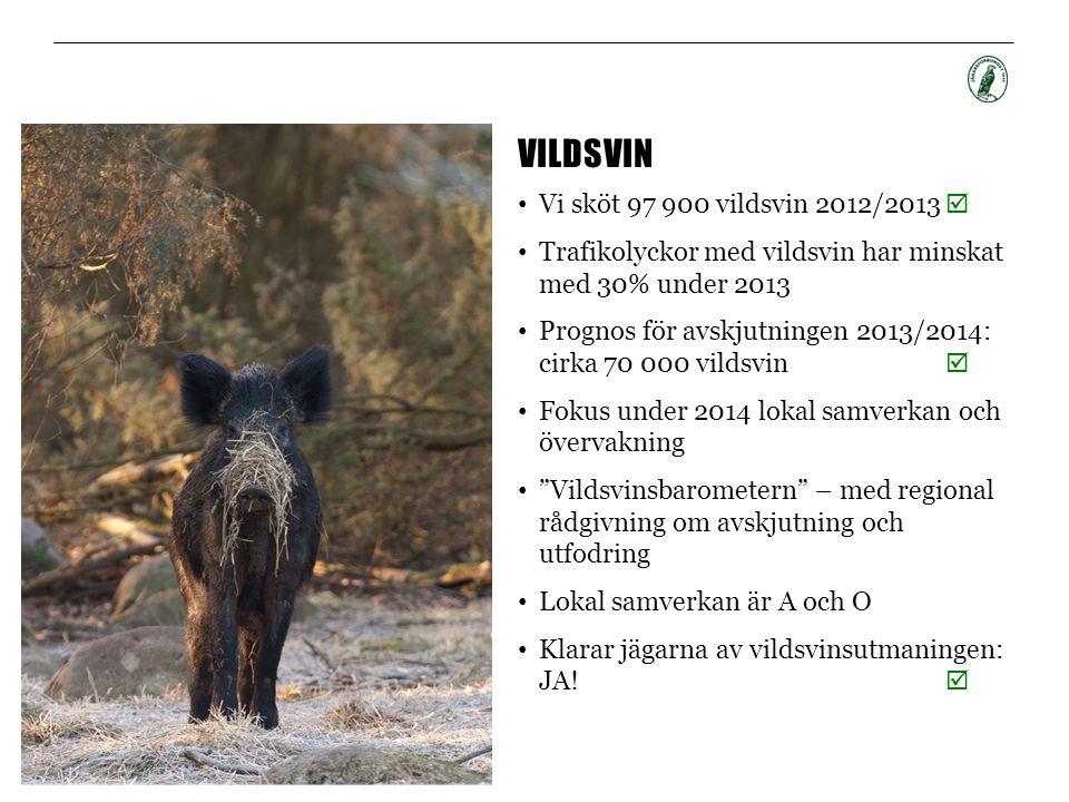 VILDSVIN • Vi sköt 97 900 vildsvin 2012/2013  • Trafikolyckor med vildsvin har minskat med 30% under 2013 • Prognos för avskjutningen 2013/2014: cirk
