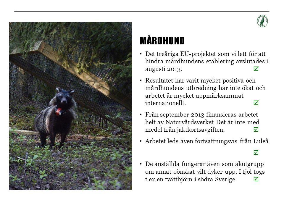 MÅRDHUND • Det treåriga EU-projektet som vi lett för att hindra mårdhundens etablering avslutades i augusti 2013.  • Resultatet har varit mycket posi