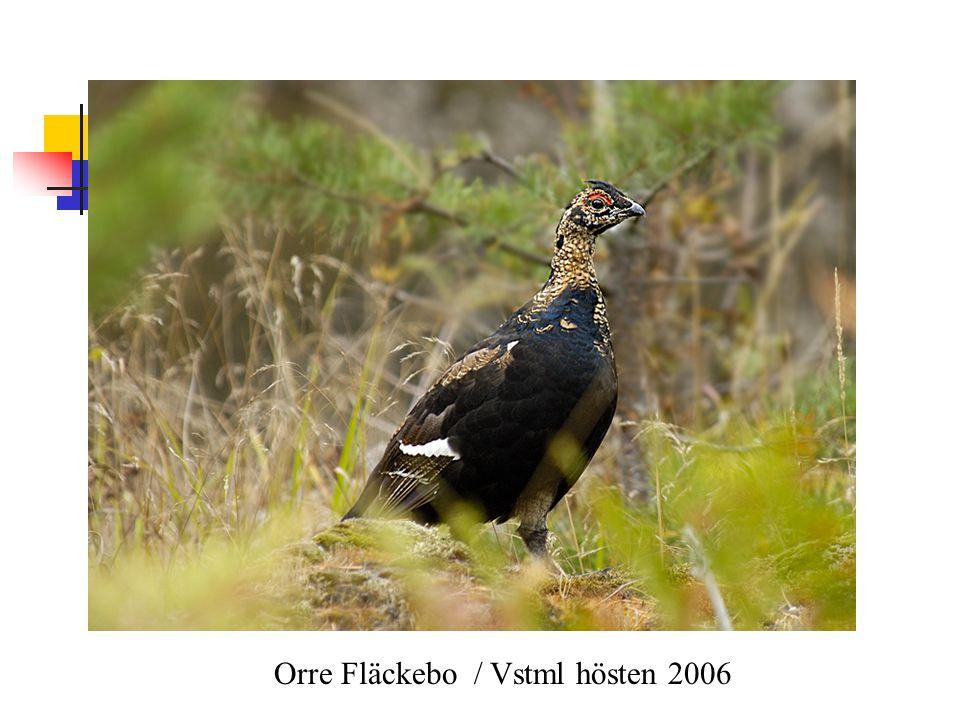 Orre Fläckebo / Vstml hösten 2006