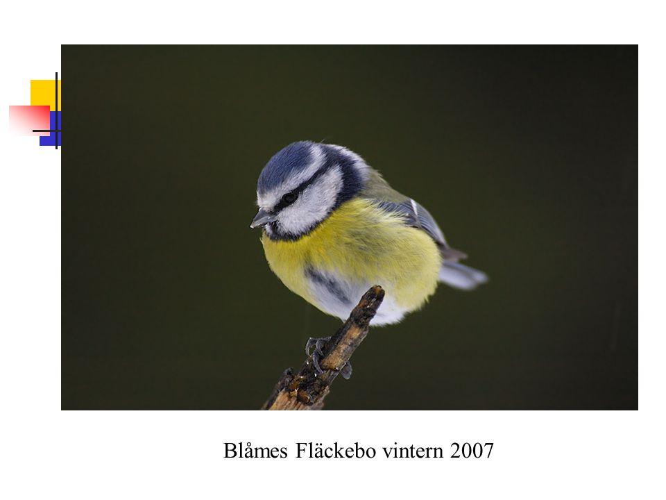 Blåmes Fläckebo vintern 2007